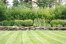 Ornamental Grasses / by Cedar Valley Arboretum
