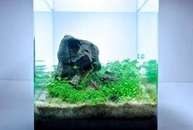 Aquascaping / by Marie Escriva