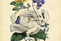 botanical  / by Paula McDaniel