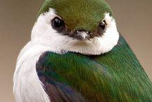 Beautiful Birds / by Kathryn Gonzalez