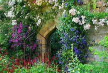 Garden painting / by Karen Neuberger
