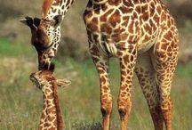 Animals I love / by Bethany Pond