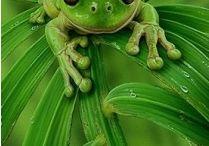 Frogs / by Maria Mercieca Ruggier