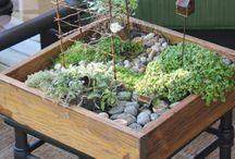 mini garden / by design bar