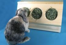 Rabbit Stuff / by Denise McMahon