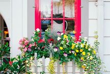 Window boxes / by Krista Burns