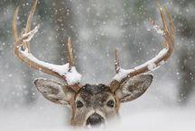 Hunting / by Megan Andrasik