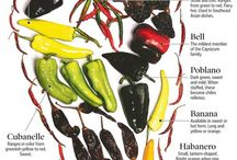 Peppers / Recipes and inspiration that embrace the red, orange, green, and yellow of this fabulous summer produce.  Embrace your inner pepper craving.   / by Coryanne Ettiene