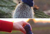 Hedgehog ❤️ / by Gabrielle Légaré