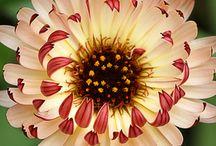 Flora. / by Raphael Alejandro Uy Fernandez
