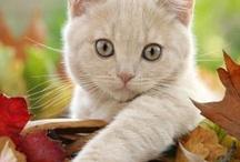 Cats~ / by Jennifer Stamey-Foushee