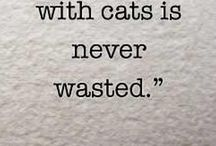 Pet Quotes / by Petswag
