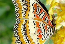 I  ❤ Butterflies / by Rachel Pearl