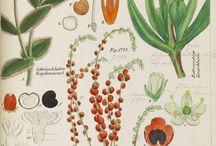 botanicals / by Luisa Brimble