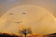 Smiles / by Leticia Contreras