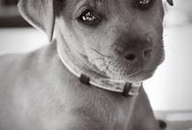 Pet Care / by Rebecca Unwin