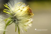Grass / by Alex Marco
