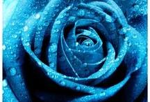 aqua - teal - blue / by stewster