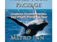 Metro Inn Albany / Metro Inn Albany Offical Pinterest Board / by Metro Hotels