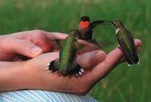 Birds Of A Feather / by Karen Chapman