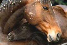 Beautiful Animals / by Melissa McManus