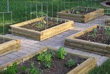 how my garden grows / by Elizabeth Heath