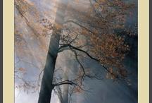 Nature Photography / by Kurt Keefner