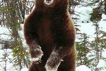 Animal - Bears / by Veren Evania