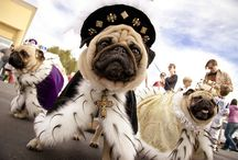 pugs / by Dayva McMullen