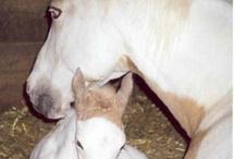 Horses / by Wendy Byrd