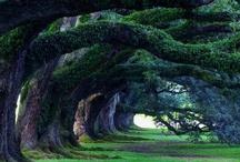 Trees & Roads / by Barbara Mills