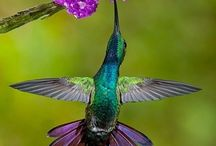 Hummingbirds <3 / by Sonya Stacey-Corona