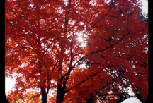 Trees / by WhiteOak Thomas