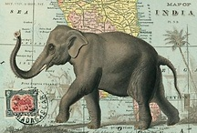 olifanten / elephants / by Cigale Méditerranéenne