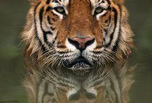 Beautiful Wildlife Art / Beautiful wildlife art / by BVS Books