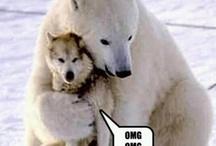 Animals / Some furry friends! / by Drew Thomas