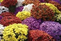 Fall Splendor / love the colors of the fall season / by Jennifer Beals