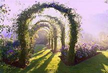Garden / Flowers / by Lynn Wardell
