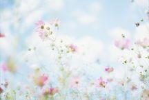 Pink / by Amanda Watson