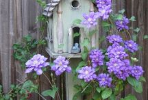 Sandy B--Bird Houses and Bird Feeders. / I think that birds are lovely (so do my cats),and their little houses are so cute! / by Sandra Belisle