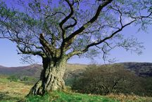 Plants & Woodlands / Picture of plants and woodlands / by Northern Ireland Environment Agency