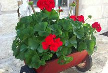 outdoor decorations / stuff / by Laura Howard