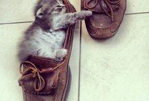 Kitties / Funny and cute kitties / by Cassandra Bennett