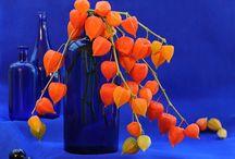 <> Blue and Orange <> / by Brenda Huntsinger