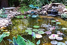 Pond Gardening / by Teresa Hedenskog Gilliam