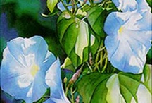 Images of Flowers / by Donetta Farrington