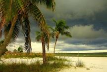 Southwest Florida / by RumShopRyan - Caribbean Blog