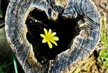 Follow your heart / I heart hearts. / by Amanda Muller