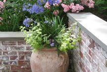Gardens & Flowers / by Kristin Basicker