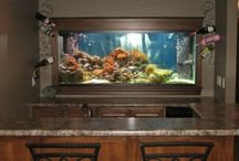 Fish tanks  / by Colleen Corley